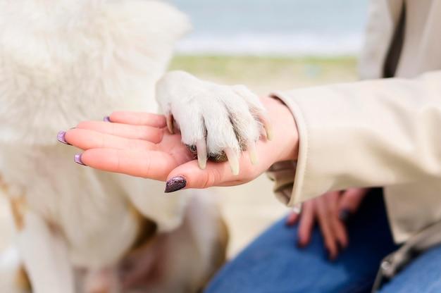 Женщина крупного плана держа лапку собак Premium Фотографии