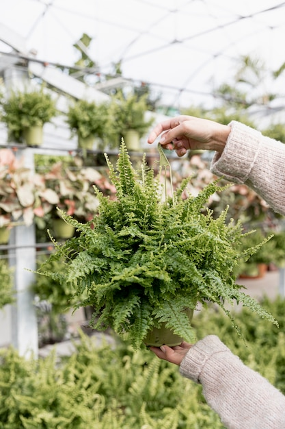 Close-up woman holding green plant Free Photo