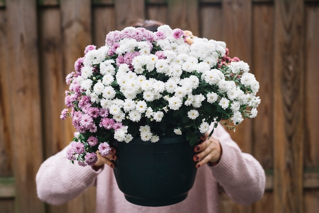 Close-up of a woman holding potted plant of pink and white aster flowers in front of her face Free Photo