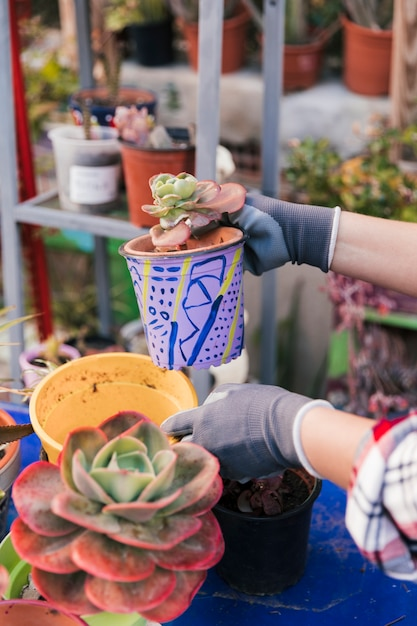 Close-up of woman's hand holding the cactus painted pot Free Photo