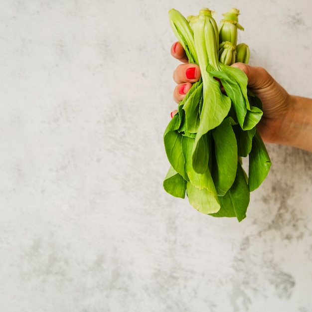 Close-up of a woman's hand holding chard vegetable Free Photo