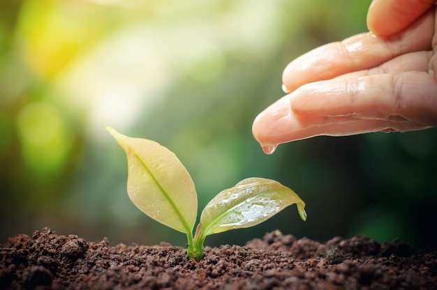 Close up of woman's hand nurturing and watering a young plants in the garden Premium Photo