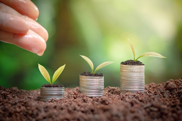 Close up of woman's hand nurturing and watering a young plants is growing up on stack of coins Premium Photo