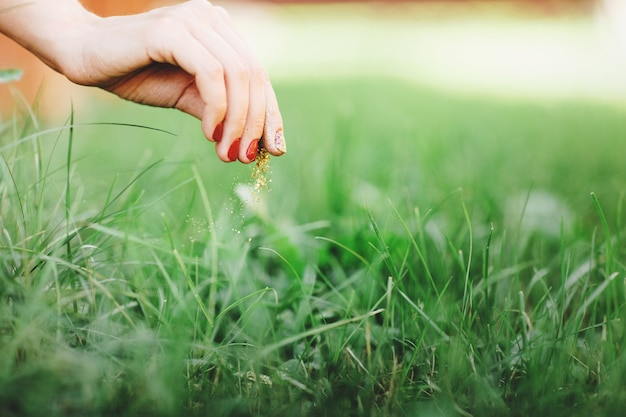 Close up of woman's hand, takes care of the lawn. Premium Photo