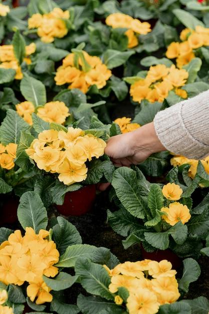 美しい黄色の花を持つクローズアップ女性 無料写真