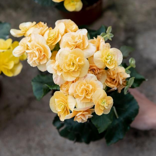 Макро женщина с красивыми желтыми цветами Бесплатные Фотографии