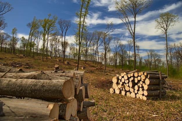 背景や抽象化のための木製の積み上げ製材ログを閉じる Premium写真