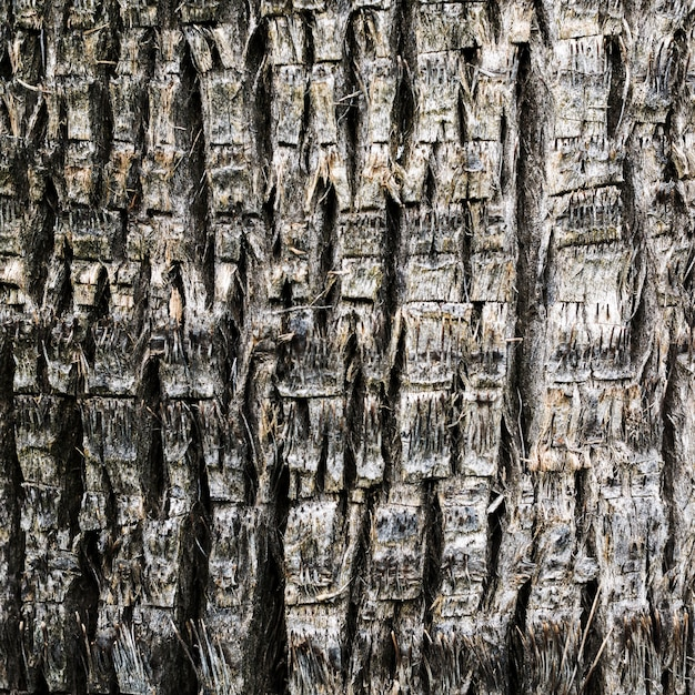 Close-up wooden texture of a tree Free Photo