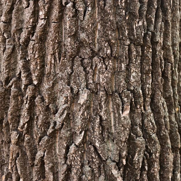 Close-up wooden tree trunk texture Premium Photo
