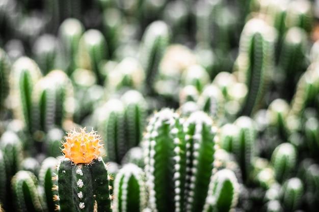 Close-up yellow flower Premium Photo