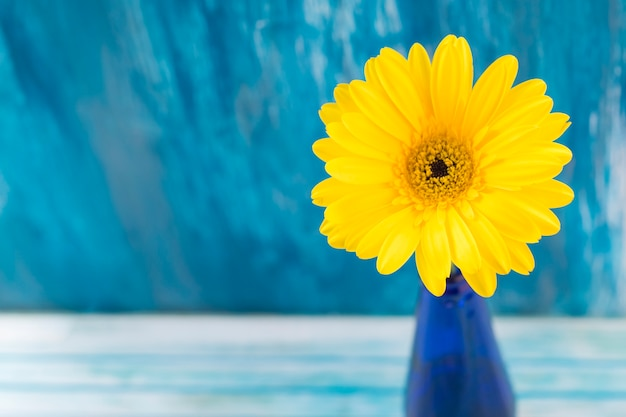 Close-up of yellow gerbera flower against blue backdrop Free Photo
