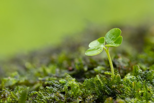 Close up of a young plant sprouting from the tropical green Premium Photo