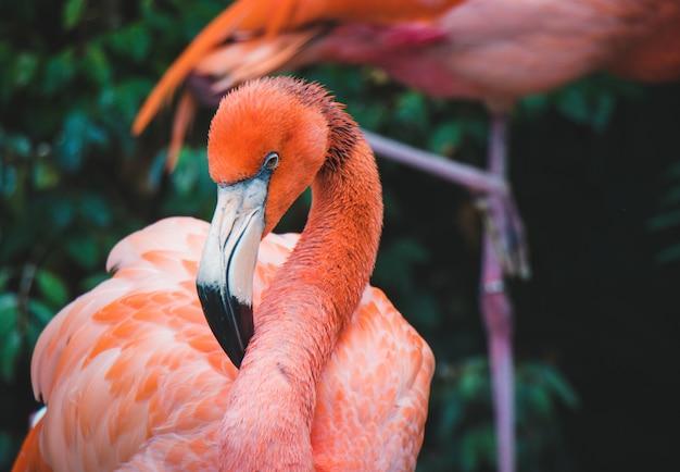 Розовый фламинго close up Premium Фотографии