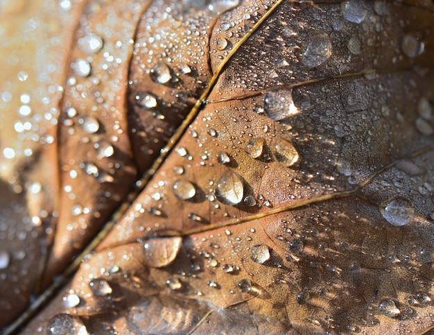 Close on water drops covered a brown leaf in autumn Premium Photo
