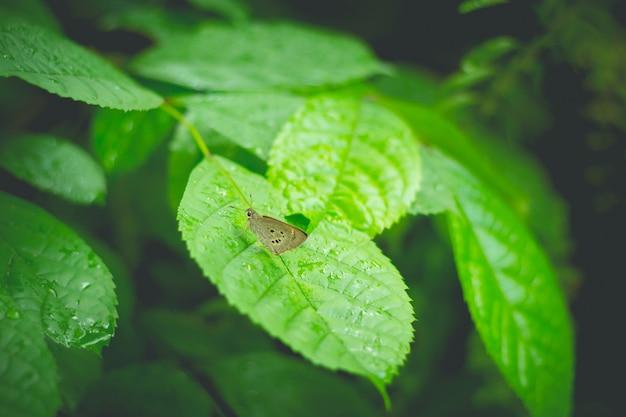 Закрытый кормление бабочки на зеленом листе (выборочный фокус) Premium Фотографии