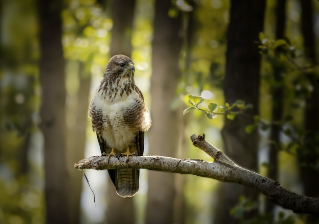 Closeup of an angry hawk standing on a tree branch in the forest Free Photo