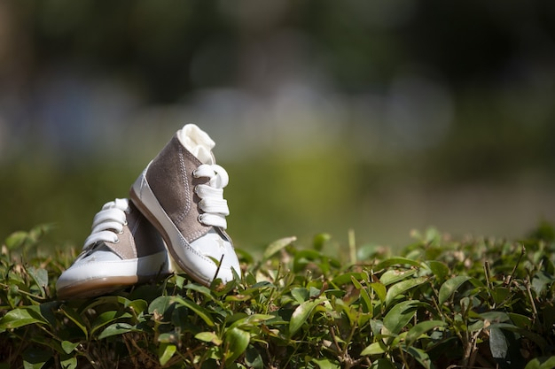 Closeup of baby sneakers on the lawn under sunlight with a blurry background Free Photo