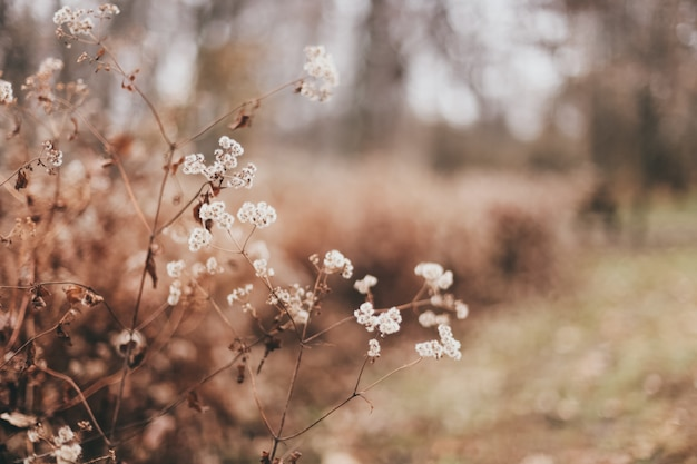 Closeup of beautiful dry leaves and plants in a forest Free Photo