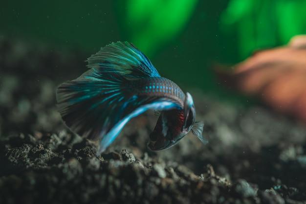 Primo piano di bello piccolo pesce variopinto esotico Foto Gratuite