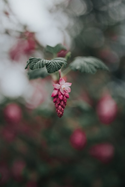 Closeup of a beautiful exotic plant hanging on a branch with leaves Free Photo