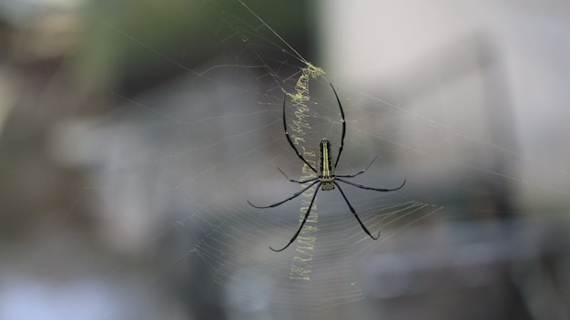 Closeup of a beautiful spider on a web Free Photo