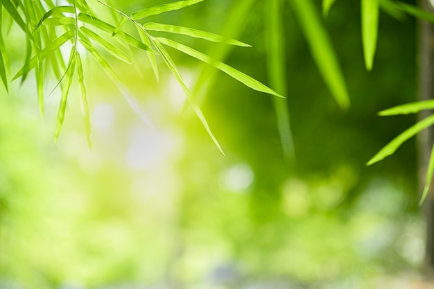 Closeup beautiful view of nature green bamboo leaf on greenery blurred background with sunlight and copyspace. Premium Photo