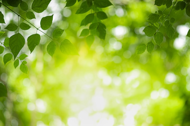 녹지 흐리게에 자연 녹색 잎의 근접 촬영 아름 다운보기 프리미엄 사진