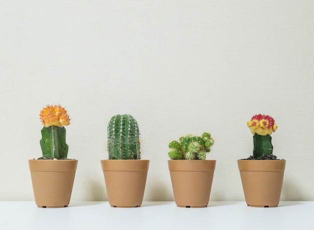 Closeup cactus for decorate on desk Premium Photo