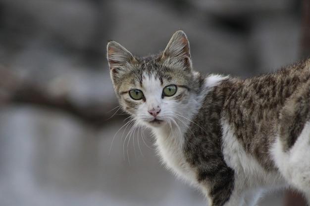 Primo piano di un gatto con grandi occhi verdi Foto Gratuite