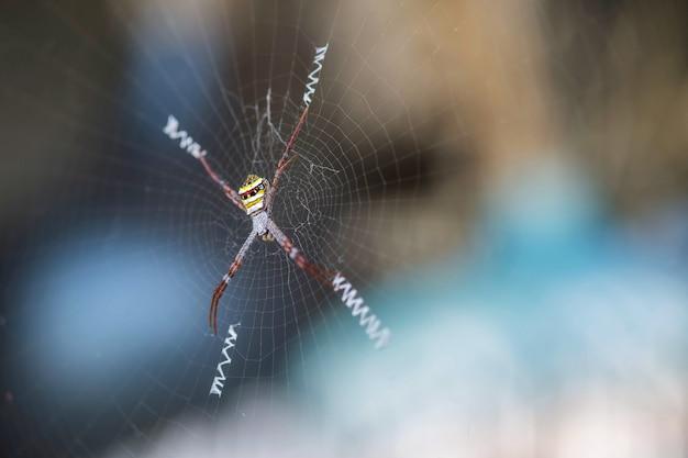 Closeup colorful spider on cobweb Premium Photo