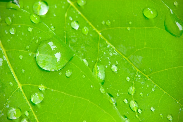 Closeup dew drops on leaves in the morning sunlight and green environment. Premium Photo
