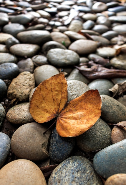 Closeup dry leaves on stone floor with soft-focus in the background and over light Premium Photo