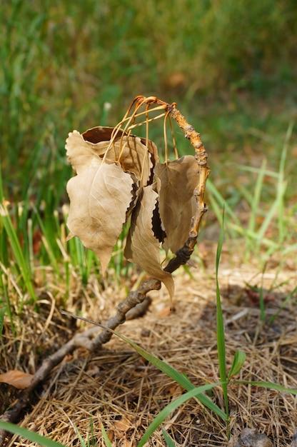 Primo piano di foglie secche circondate dall'erba in un campo sotto la luce del sole Foto Gratuite