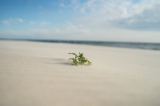 Closeup of an evergreen leaf on the sand under sunlight Free Photo