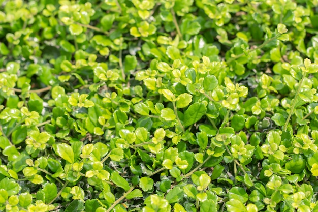 Closeup of green leaf on blurred background in garden Premium Photo