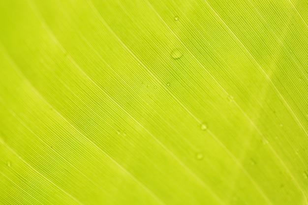 Closeup of green leaf with drops background Premium Photo