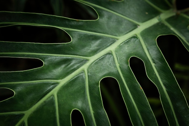 Closeup green tropical leaf Free Photo