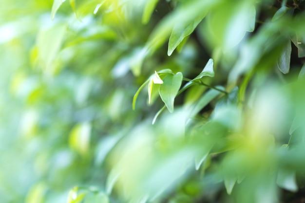 緑の葉の背景の拡大画像 Premium写真