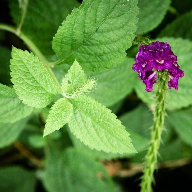 Closeup leaves and purple flower Free Photo