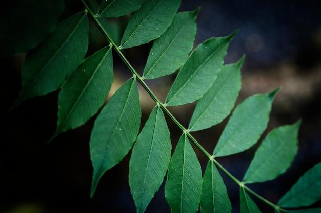 Крупным планом листья с размытым фоном Бесплатные Фотографии