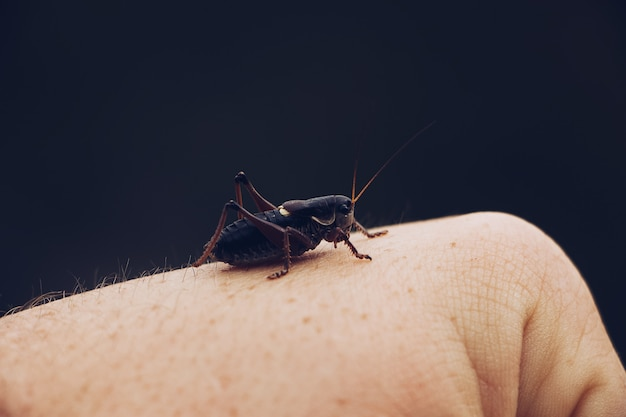 Closeup of a locust sitting on a person's hand Free Photo
