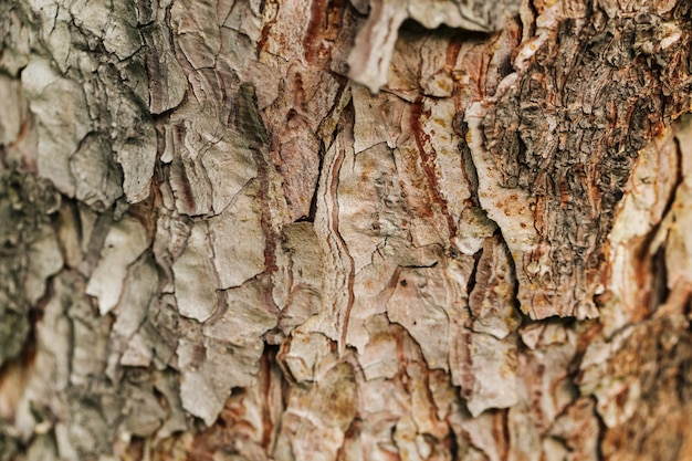 Closeup macro dry tree bark texture background Premium Photo