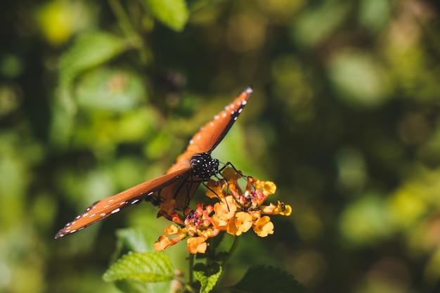 Closeup monarch butterfly Premium Photo