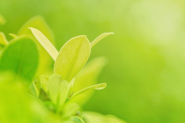 Closeup nature of green leaf in garden under sunlight, natural green plant background. Premium Photo