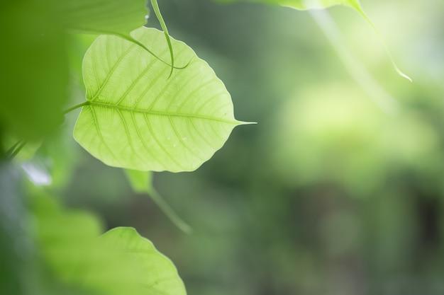 Closeup of nature green leaf and sunlight Premium Photo