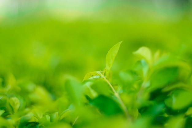Closeup nature view of green leaf in garden at summer under sunlight. Premium Photo
