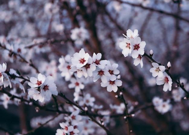 日光の下で美しい桜のクローズアップ 無料写真