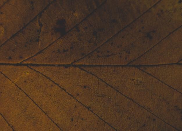 美しい葉のテクスチャのクローズアップ 無料写真