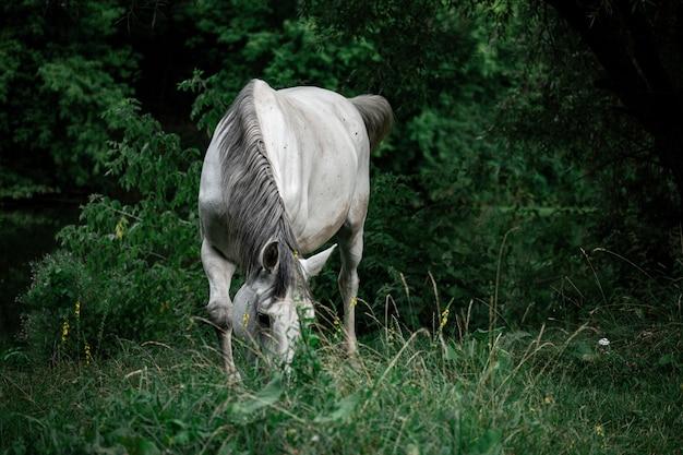 백그라운드에서 나무와 잔디 필드에 아름다운 백마의 근접 촬영 무료 사진