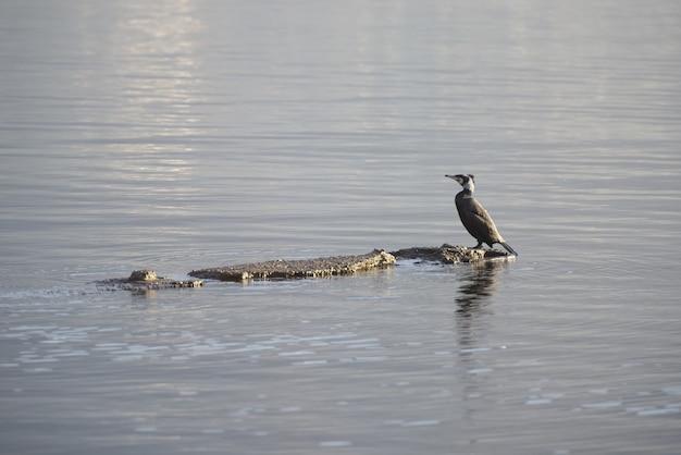 湖の真ん中で岩の上に立っている鳥のクローズアップ 無料写真